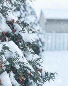Snow Closure Today